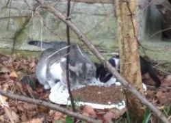 Sześć bezdomnych kotków szuka domu.
